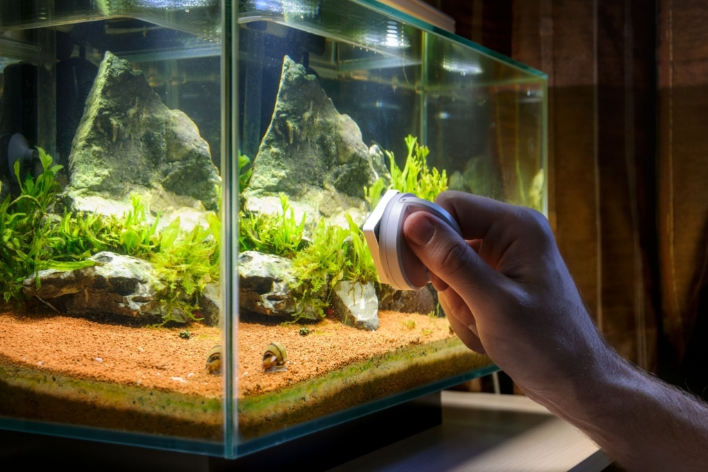 Mounting lamps on the terrarium